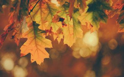 El otoño emocional